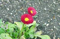 赤紫と黄色の花