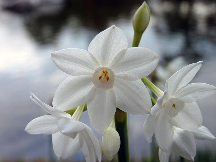綺麗に咲いた白い花の拡大写真