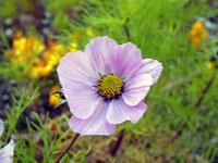 12月冬に咲いた白紫の綺麗な野花