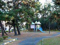 公園の中の松の木と滑り台