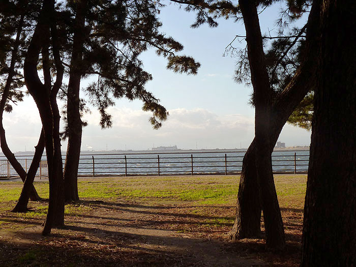 松の森を抜けると海が広がっていたの拡大写真