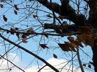 枯れ木と枯れ葉ー冬の景色