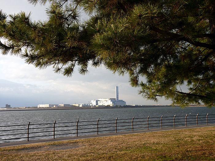 松の木の下から見る海の風景の拡大写真