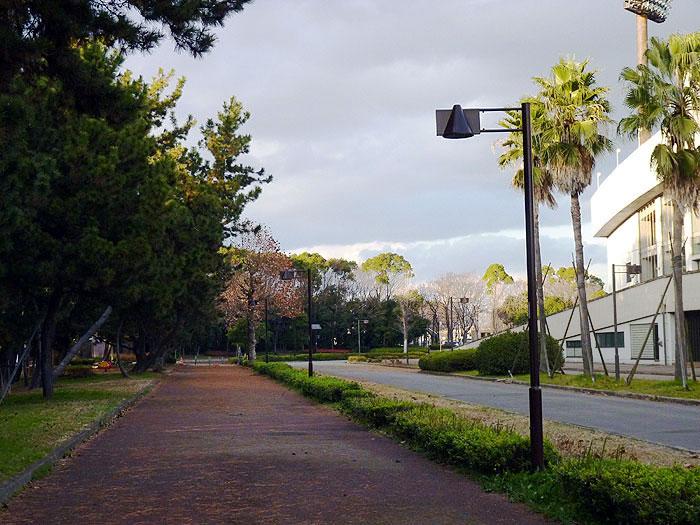 赤茶色の歩道と松の並木の拡大写真