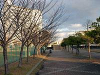 枯れ木が並んだ道ー冬の風景