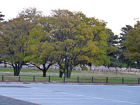 公園の木(植物)と駐車場の風景
