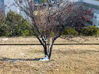 枯れ木に残る雪