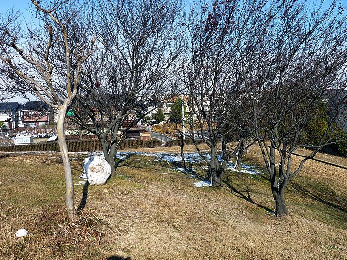 雪と枯れ木の冬景色の拡大写真