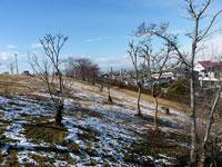 枯れ木と芝生に広がる雪の冬景色