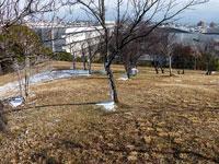 枯れ木となごり雪の冬景色