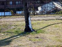 木の幹に残った雪と枯れた芝生の景色