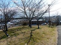 枯れ木と芝生の冬景色