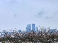 枯れ木の向こうの大きなビルや町の冬の風景