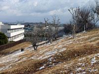 茶色く枯れた芝生に広がるなごり雪