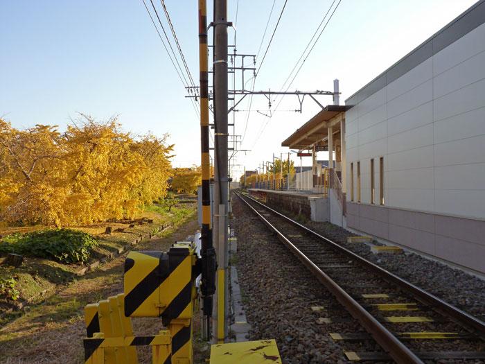 綺麗な銀杏(イチョウ)と踏切と線路と駅の風景の拡大写真