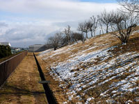 傾斜する芝生に残った雪と枯れ木の冬景色