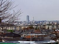 遠くに見えるビルの町と枯れ木の冬景色