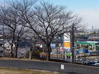 散歩道と枯れ木とガソリンスタンドを見える町並みの風景