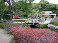 橋と建物と植物の風景