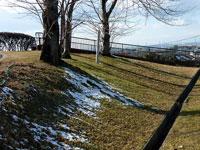 芝生に積もった雪と枯れ木