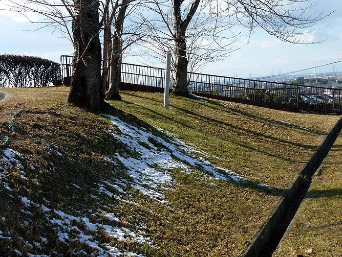 芝生に積もった雪と枯れ木の拡大写真