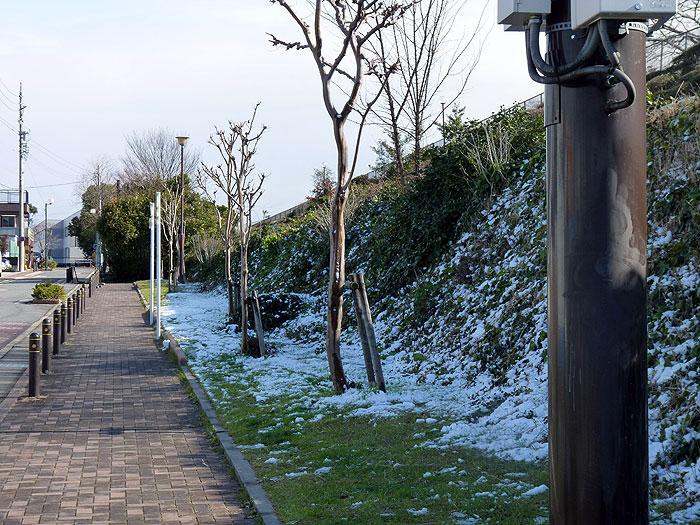 歩道と雪と枯れ木の冬景色の拡大写真