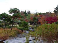 植物と紅葉と松の木の風景