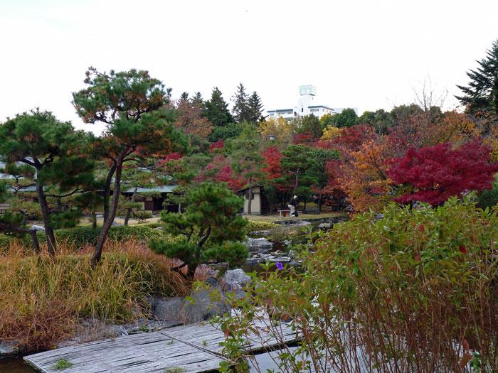 植物と紅葉と松の木の風景の拡大写真