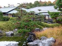 建物と松の木の風景