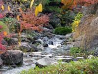 自然の滝と川の風景