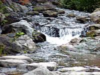 自然の滝と川の景色