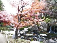 滝と紅葉の風景