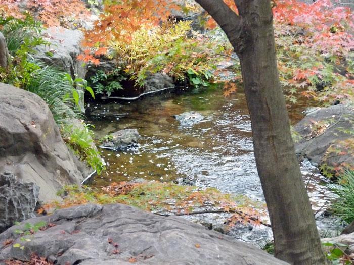 小川とモミジの木の拡大写真