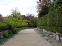 散歩道と植物(木や紅葉など)の風景