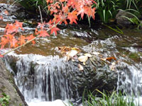 紅葉と綺麗な自然の滝