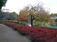 紅葉と植物の道