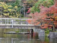 橋と川と植物(モミジなど)の風景