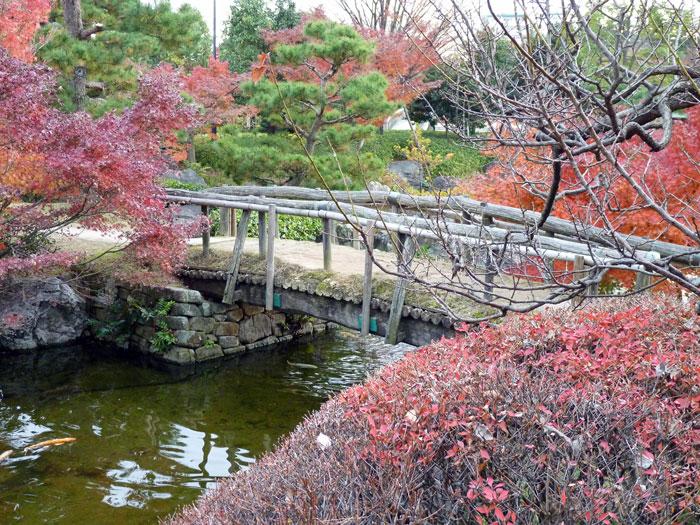 木の橋と小川と秋の植物・紅葉の拡大写真