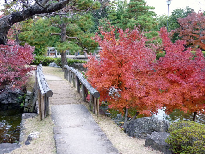 木の橋と秋の紅葉・植物の拡大写真