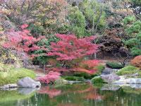 池路いろとりどりの植物と秋の紅葉