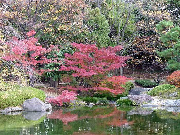 池路いろとりどりの植物と秋の紅葉の拡大写真