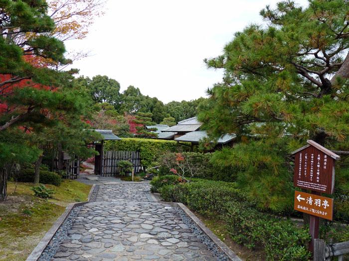 松の木や植物の風景の拡大写真