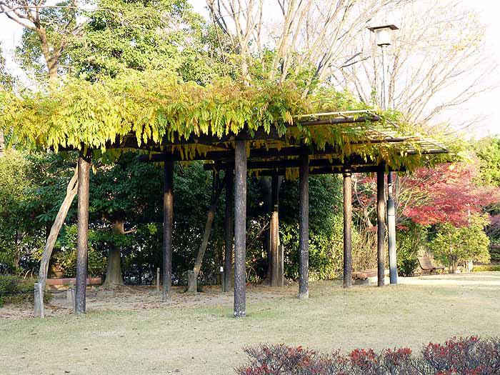 木の建物(ベンチ)と緑の植物と公園の拡大写真