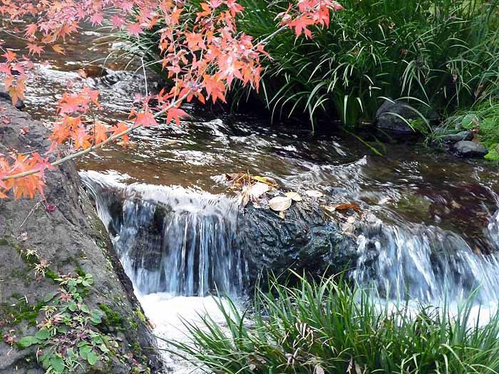 自然の滝の流れと川とモミジの拡大写真