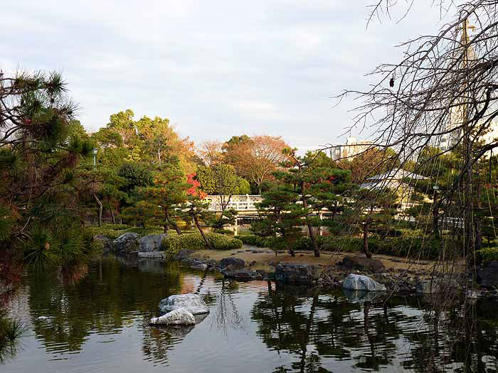 きれいな池と色とりどりの植物の拡大写真