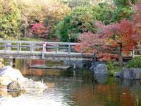 木の橋と川、自然な植物
