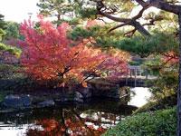 きれい川と紅葉と松の木と橋の風景