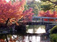 川に架けた木の橋と綺麗な紅葉