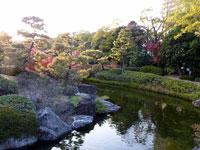 松の木と川と色とりどりの植物の風景