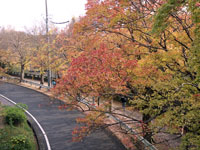 秋の紅葉並木と道路の風景